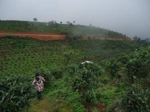 natural-tea-gardens