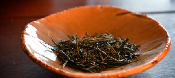 Eines von drei Sencha-Kultivaren: Sayama kaori